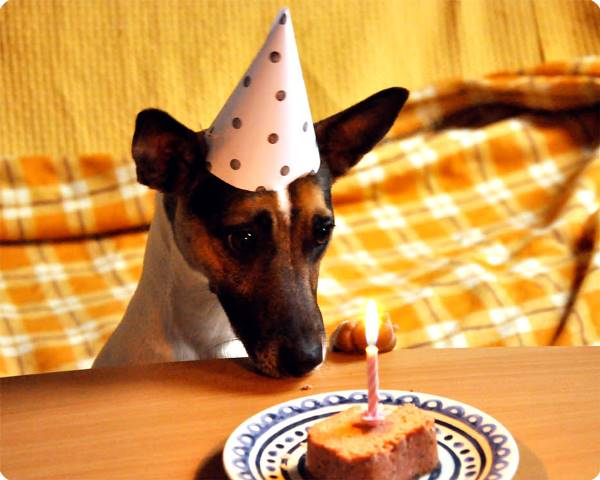 DIY Doggie Birthday Hat