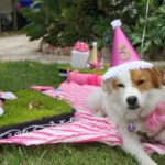 Dog Birthday Party-love the pink!