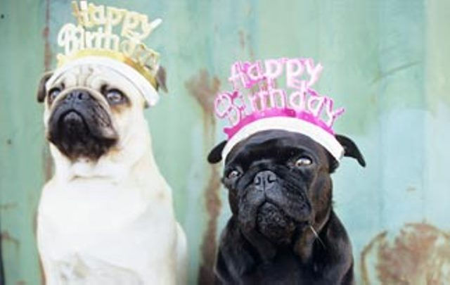 Dog Birthday hat ideas