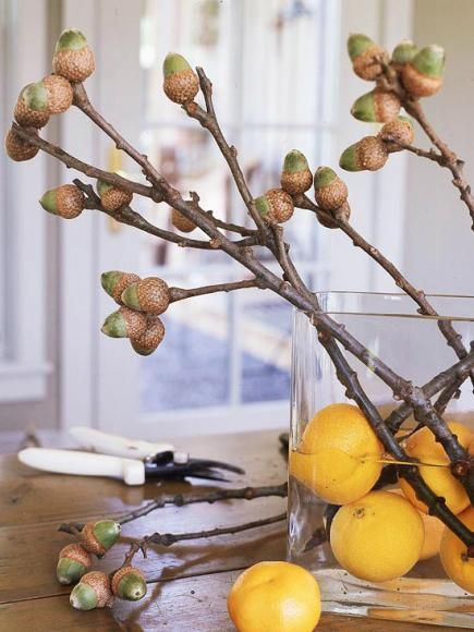 Love these nuts, branches and oranges for fall decor