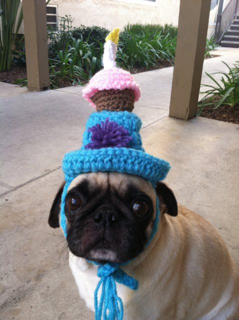 Knitting Birthday Meme : Dog birthday hats the cutest b lovely events