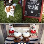 Super Cute Dog's Birthday Party