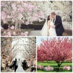 Blossoming Tree Wedding Ideas