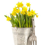 I love this Daffodil centerpiece for spring!