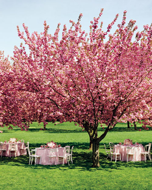 Outdoor cherry blossom wedding
