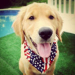 Lovely 4th of July Dogs To Celebrate Today!