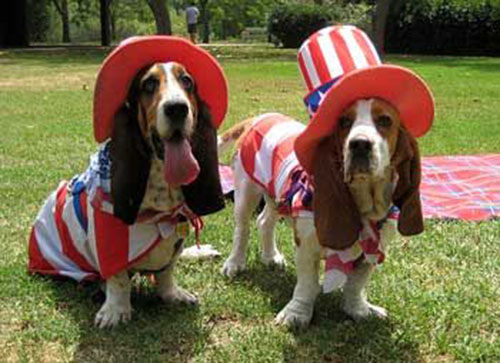 Cute 4th of July basset hounds
