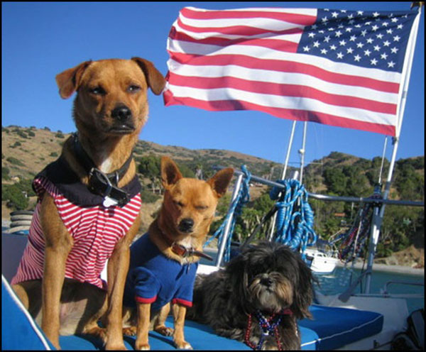 These 4th of July pups are cute!