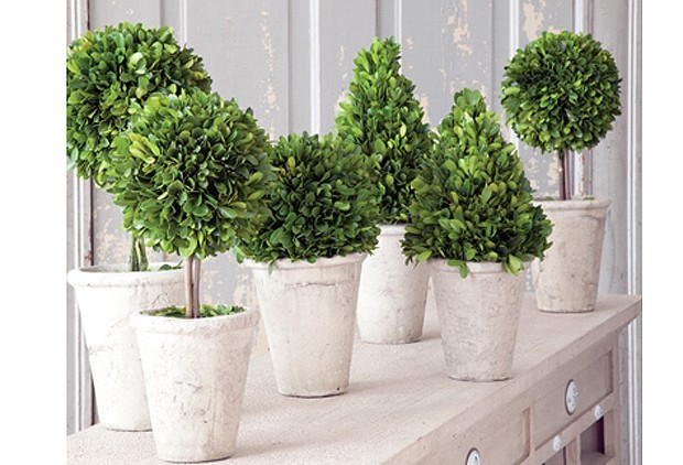Boxwood Topiary Centerpiece Ideas!