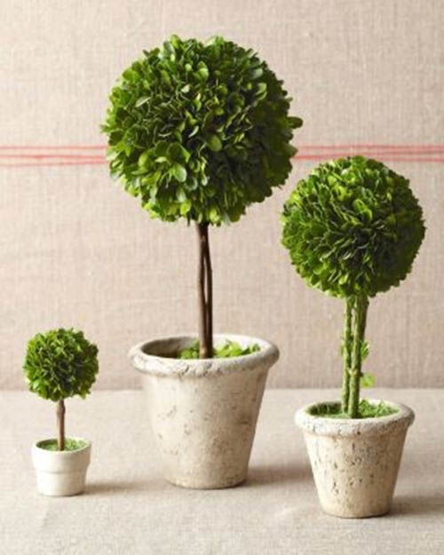 Darling Topiary Centerpieces for any event!