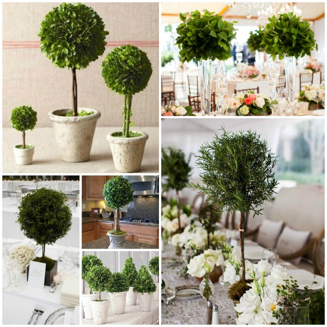 We Love Topiary Centerpieces! - B. Lovely Events
