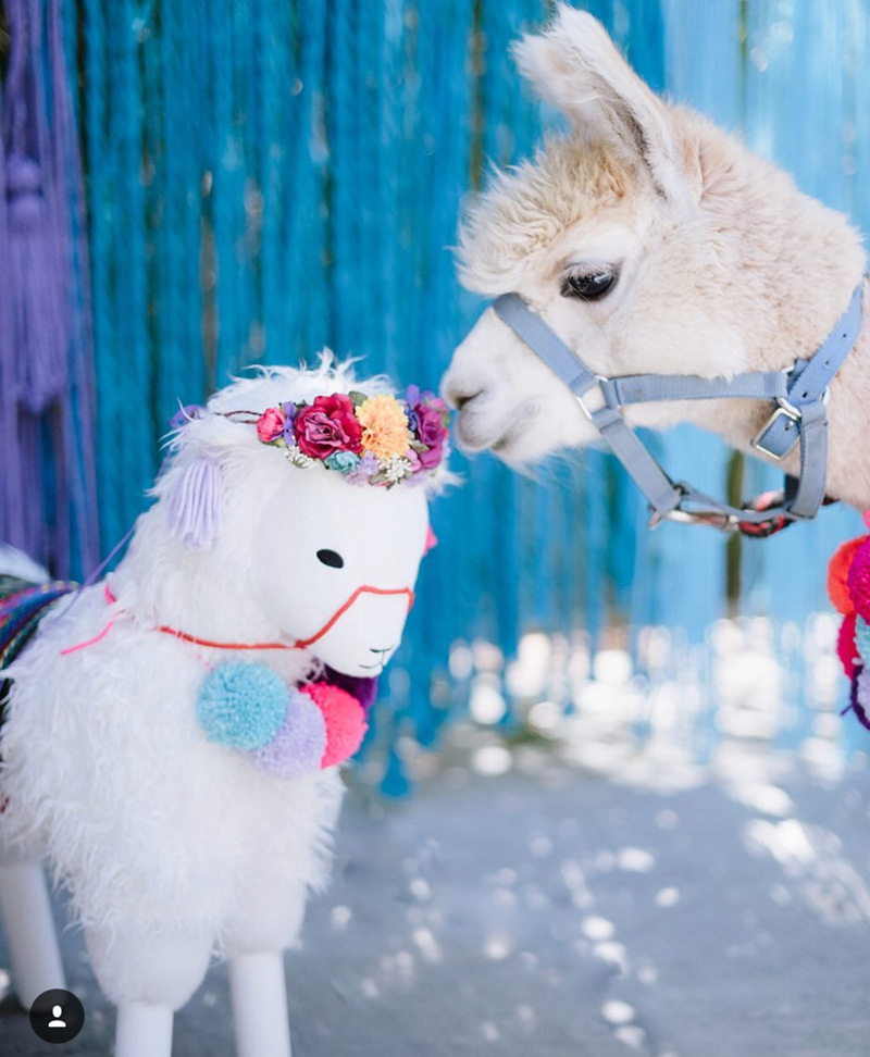 llama party heaven! - See more llama party love on B. Lovely Events